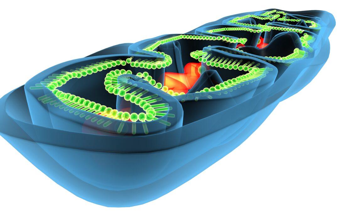 Mitochondriopathie